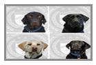 K9 Dog Gallery