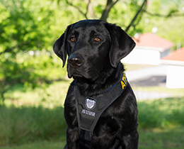 Image of an arson canine