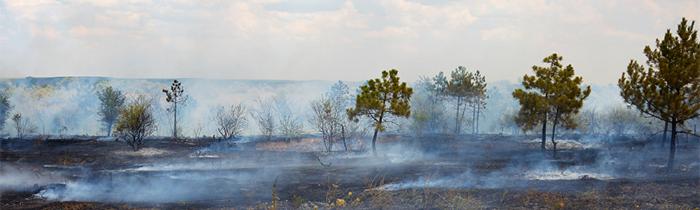 Imagen de la tierra quemada después del incendio forestal.