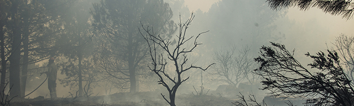 Image of a burnt forest