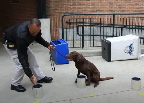 Special Agent Canine Handler George Goodman and K-9 Bonny compete in the annual ATF National Odor Recognition Test