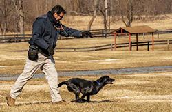 ATF Search Enhanced Evidence K-9 Training