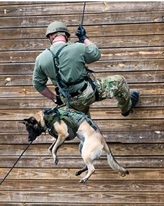 A Special Response Team canine and handler repel down a training wall