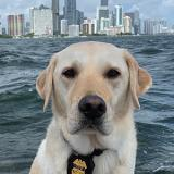 K-9 Babs at the waterfront