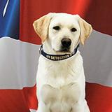 K-9 Darwin poses in front of a flag