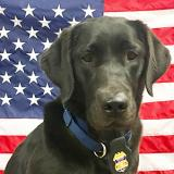 K-9 Claudette stands in front of a flag
