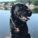K-9 Sunny is ready for the mission