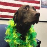 K-9 Bonny celebrates St. Patrick's Day 2017