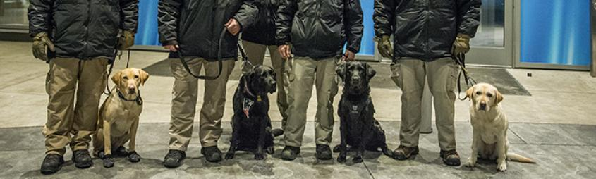 Image of ATF canines at the SuperBowl