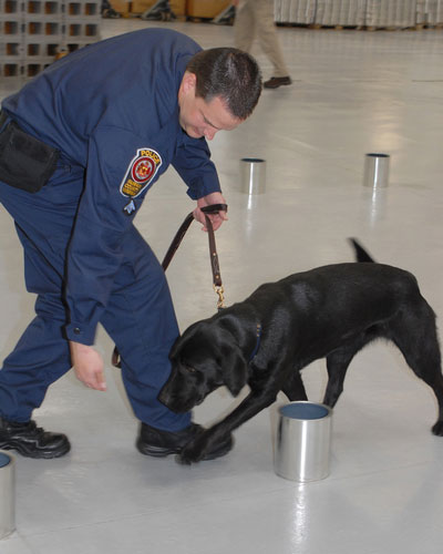 Image of canine handler training black lab to sniff
