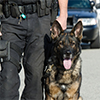 Image of a K-9 with a law enforcement officer