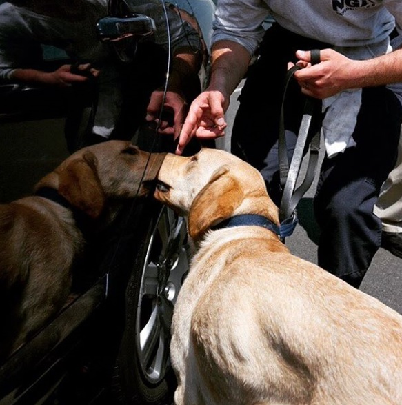 image_of_dog_sniffing_car